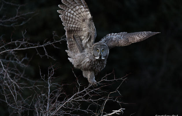 Audubon Photography Awards Exhibit: Burlington Reception