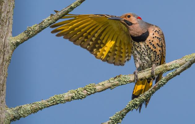 Bird Blowout