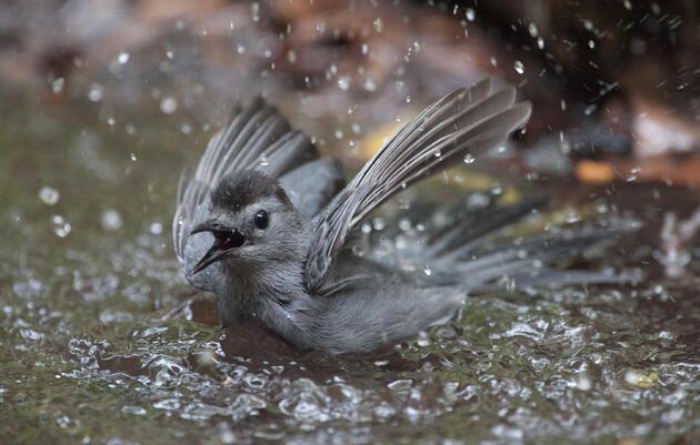 Summer Migration Bird Monitoring