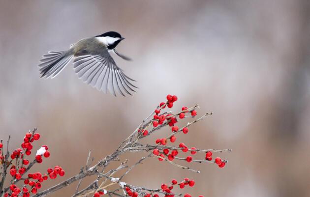Early-Winter Bird Monitoring Walk