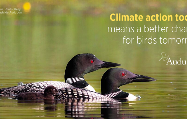 Birds in a Changing Climate: What's it mean for Vermont?