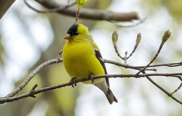 Global Big Day Bird Monitoring Walk