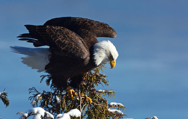 Critical Bird Species in the Champlain Valley How Can Landowners Make a Difference?