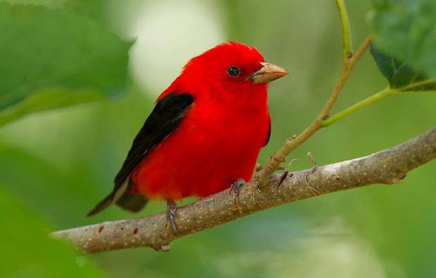 The Birders Dozen: Twelve Birds Who Need our Woods