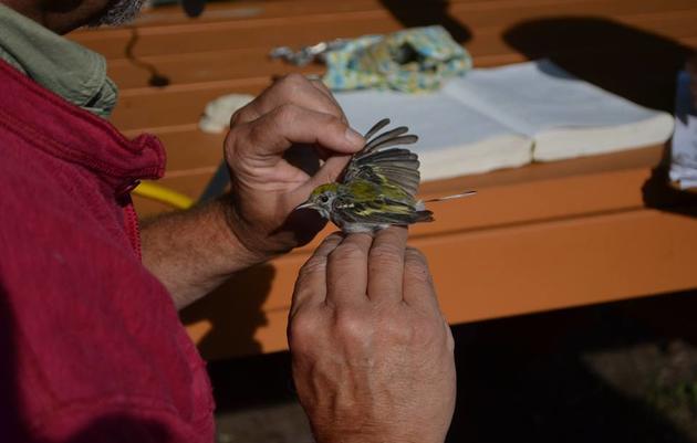 Banding and Birding