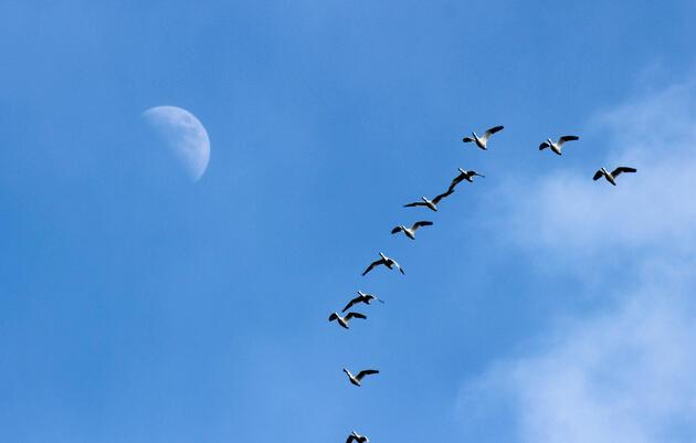 Fall Migration Bird Monitoring Walk