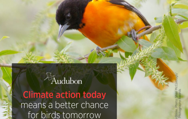Birds are Telling Us It's Time to Take Action on Climate