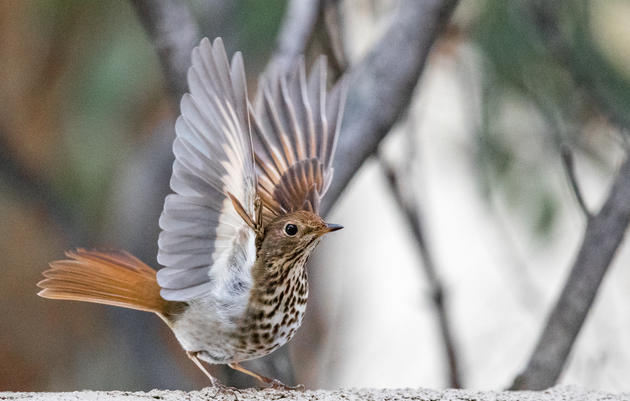 Audubon Vermont Joins Energy Independent Vermont Coalition to Combat Climate Change