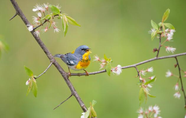 Connect with Audubon