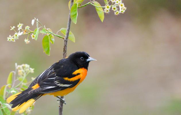 Plants for Birds: Burlington - Oakledge Park Wetland Restoration