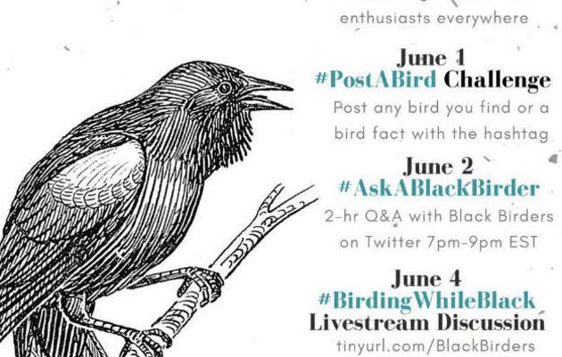 Celebrate #BlackBirdersWeek
