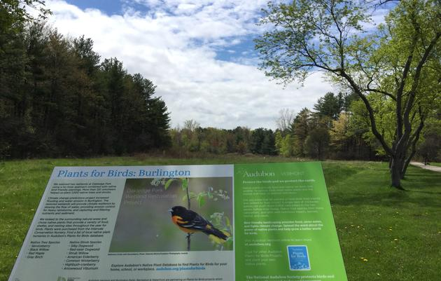 City of Burlington Planting 1,500 Restoration Trees