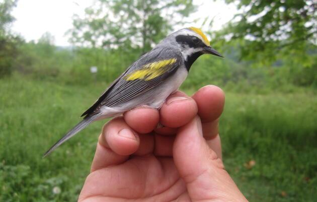 Catamount Family Center: Work that's Good for Birds