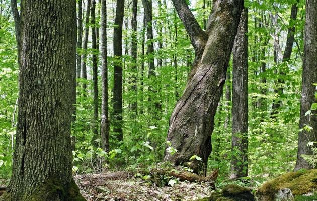 Benefits of Older Forests
