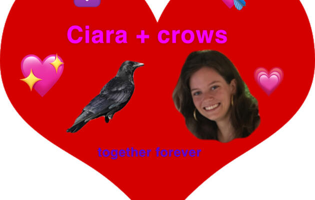 Ciara and the Crows: Dating Advice from a Crow