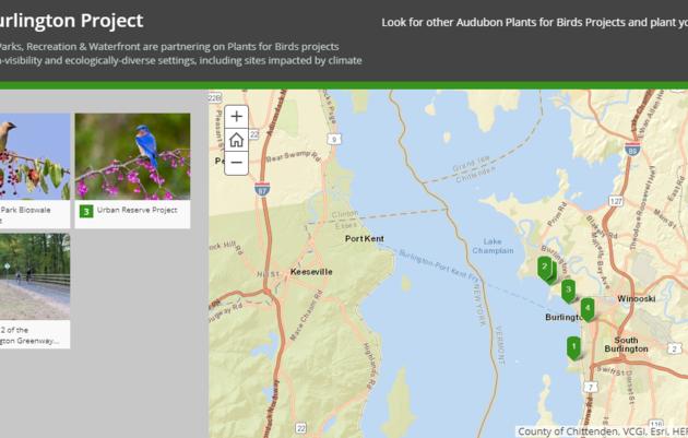 Plants for Birds: Burlington - Story Map