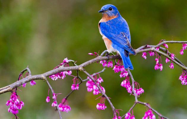 Plants for Birds: Burlington - Urban Reserve Project