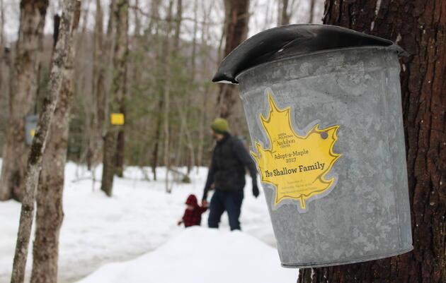 Maple Sugaring Season at the Green Mountain Audubon Center