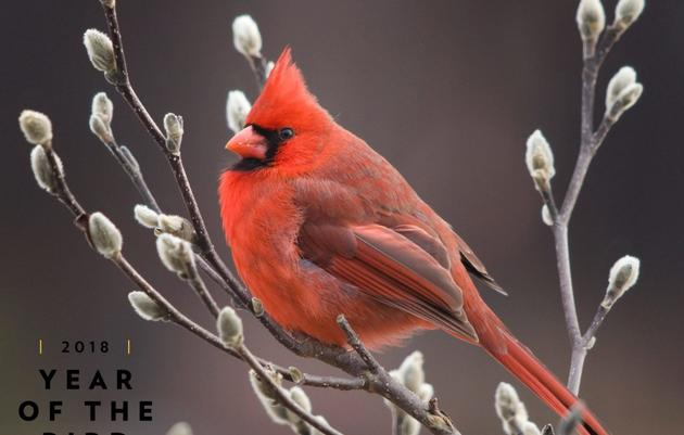 Welcome to the Year of the Bird!