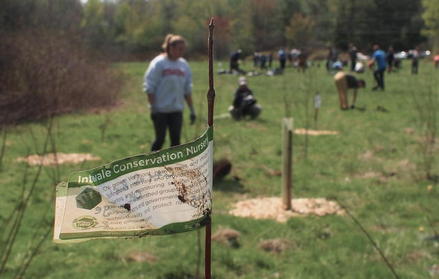 Plants for Birds: Oakledge Park Tree Planting