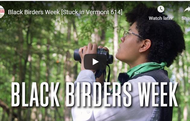 Stuck in Vermont: Birding With Debbie Archer of Audubon Vermont During Black Birders Week