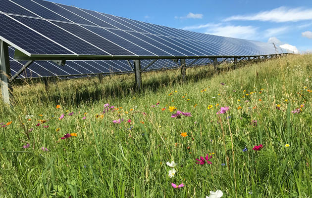 Pollinator-Friendly Solar with Bird-Friendly Buffers