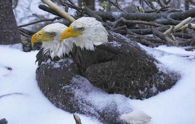 Winter Naturalist Snowshoe