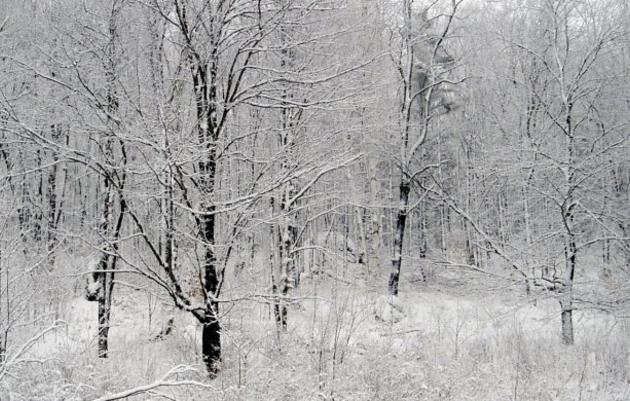 E.O. Wilson's Half-Earth Project Debuts in Vermont