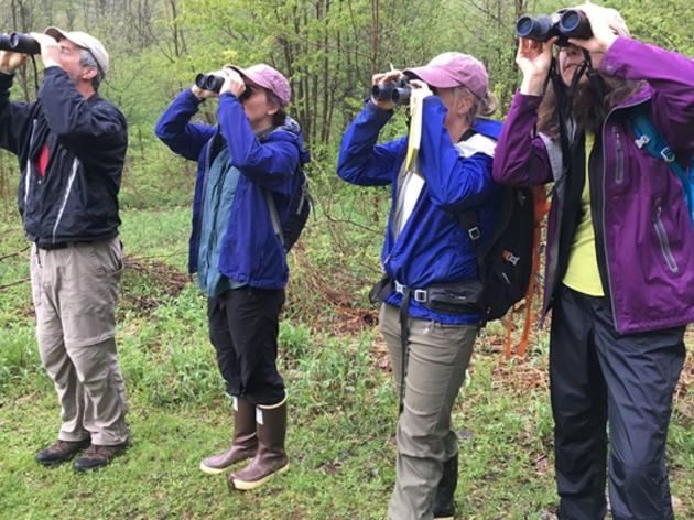 Getting Into Birding