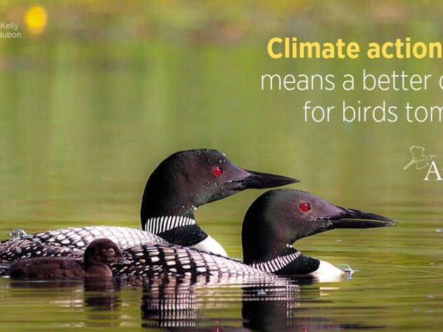 Birds are telling us it's time to take action
