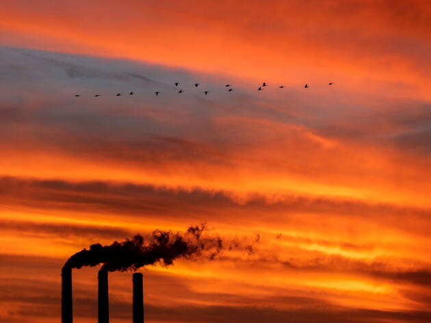 How a Landmark Environmental Law May Have Quietly Saved a Billion Birds