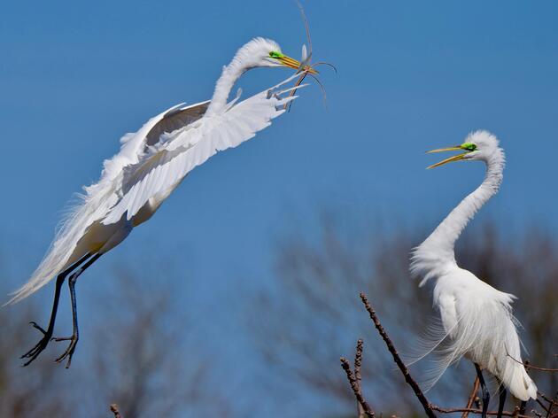 Birds Score Trifecta at Vermont Legislature