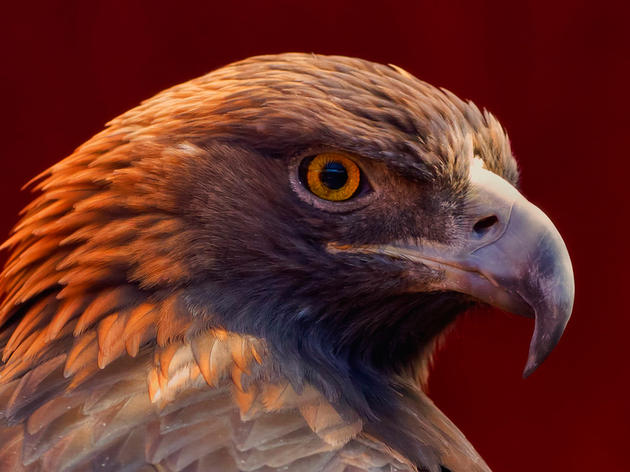 Historic Wildlife Conservation Crisis
