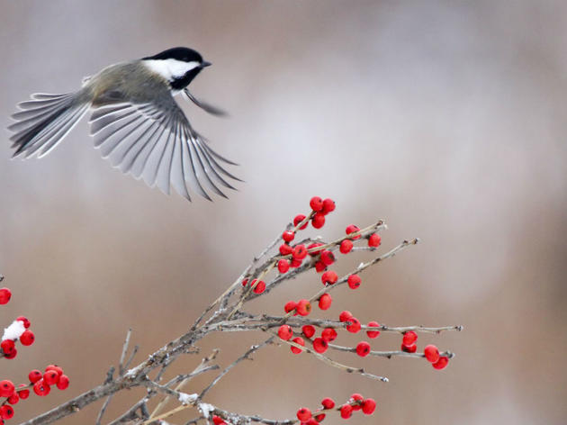Plan for Plants for Birds
