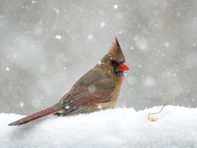 Winter Wonder: Animals in Winter