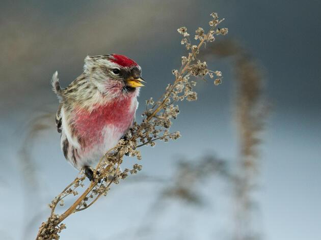 A COVID-Safe Audubon Christmas Bird Count