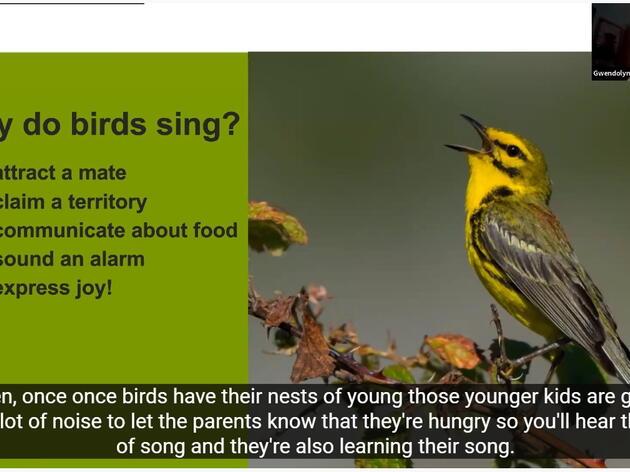 Presentation: Birding by Ear