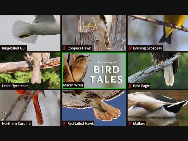 An Evening of Bird Tales