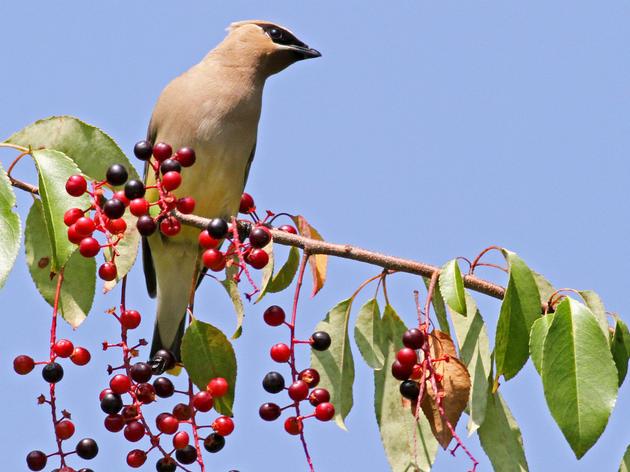 Plants for Birds: Burlington - Leddy Park Bioswale