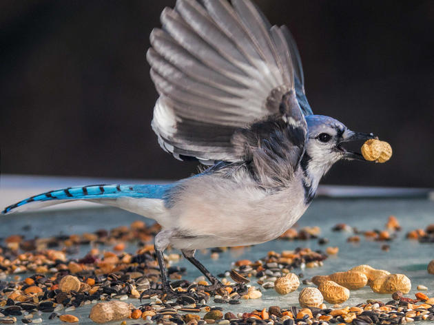 Early December is Prime Time for Feeding Birds