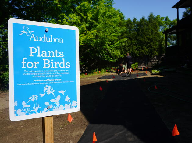 The Importance of Bird-Friendly Plantings
