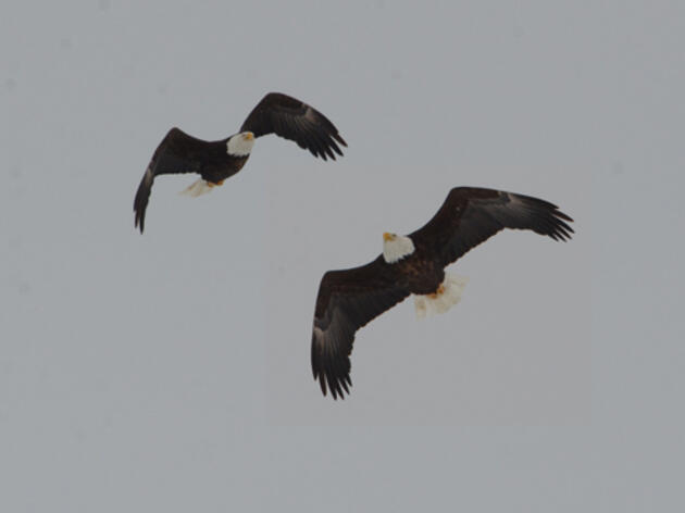 2021 Winter Bald Eagle Survey Results