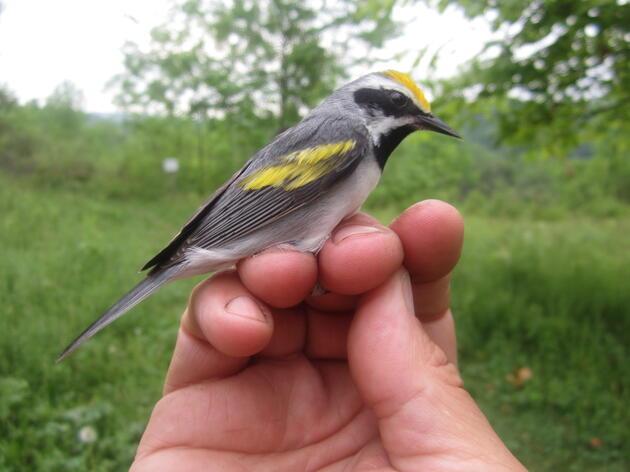 Catamount Family Center undertakes habitat management for birds and wildlife.