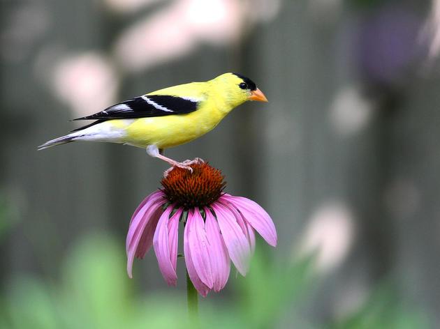 Design Your Own Plants for Birds Garden