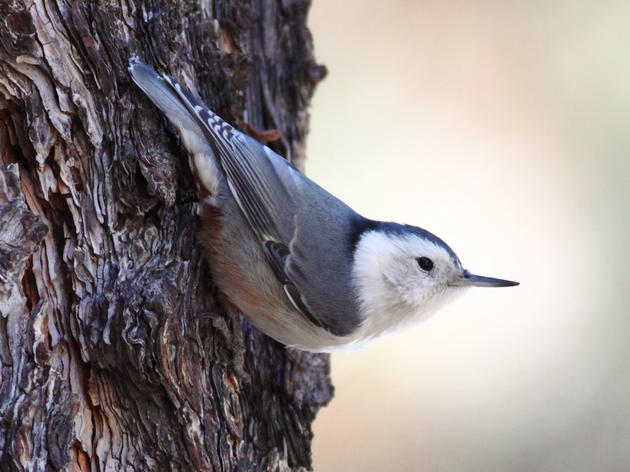 Climate Watch: Birding to Conserve