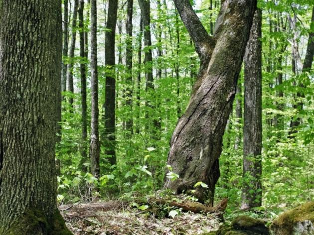 Benefits of Older Forests