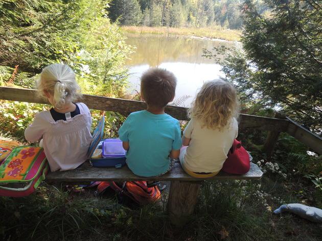 Beaver Pond Adventures