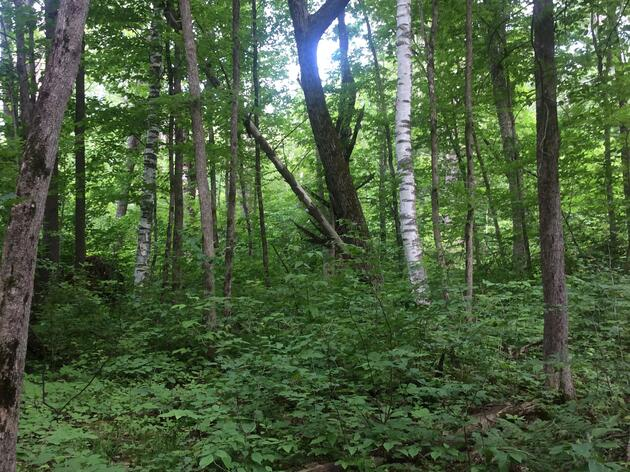 Understanding Wildlife Ecology and Forest Management at the Andrews Community Forest