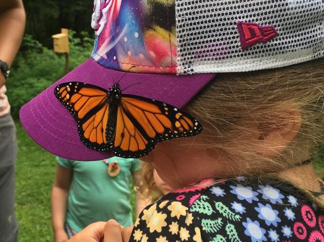 Highlights from Pre-K Nature Camp