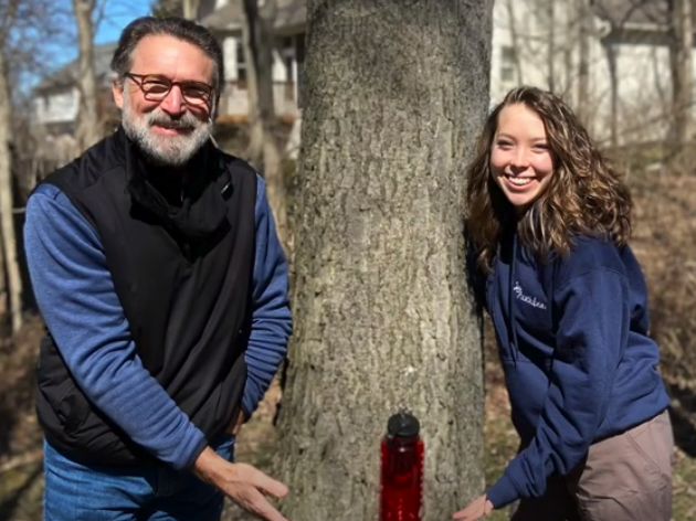 Backyard Maple Tapping for Beginners: Our Experience